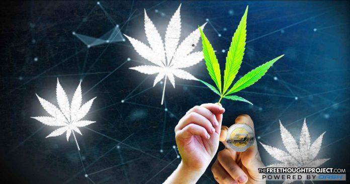 cannabis-blockchainmns