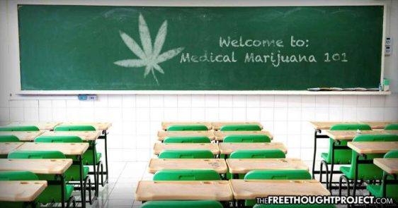 cannabis-school