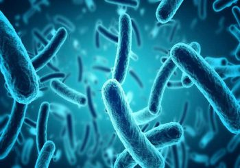 Bacteria is Best: Why a Healthy Gut Microbiome is Key to Cancer Prevention |  Wake UpWorld